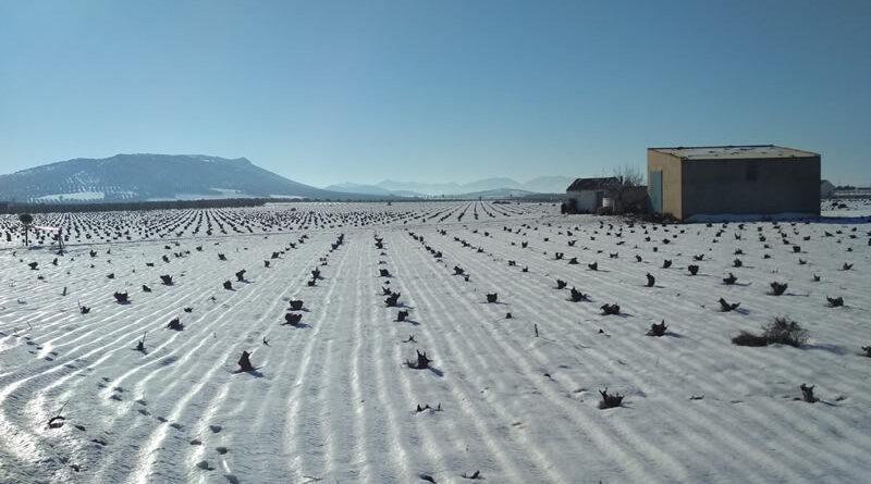 año de nieve, año de vienés