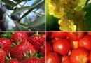Fertilizantes ecológicos para el sistema